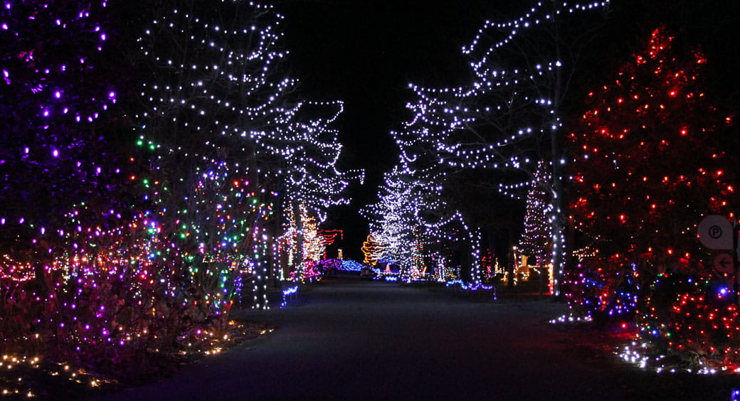 Dazzling Drivethru Holiday Light Displays | NEA Member Benefits