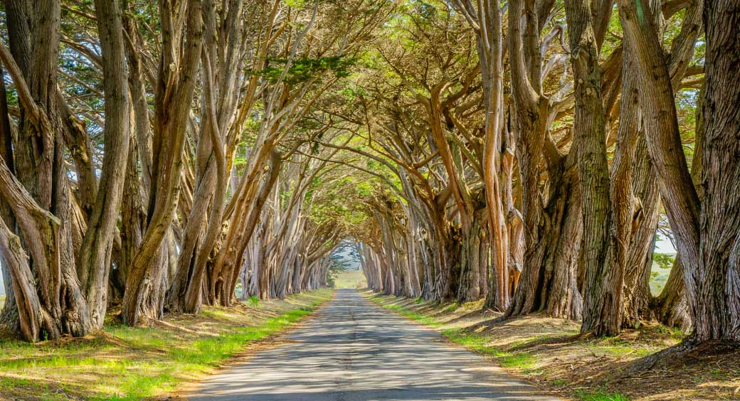 Cypress tunnel at Point Reyes National Seashore in California